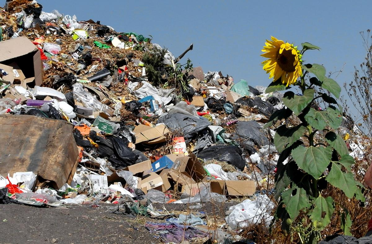 a sunflower growing in a garbage dump