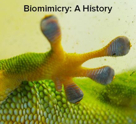Biomimicry: A History